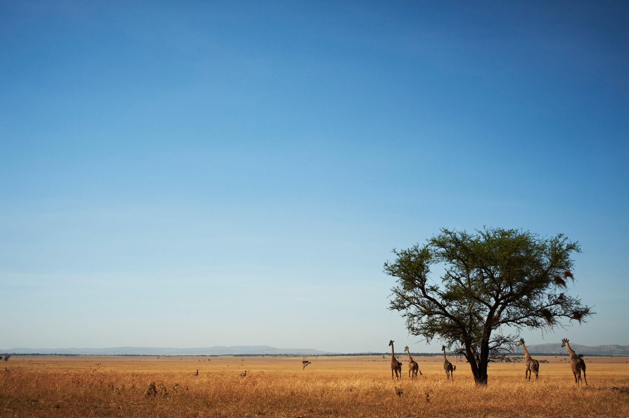 Tanzania - The True Heart of Africa - Timeless Africa Safaris