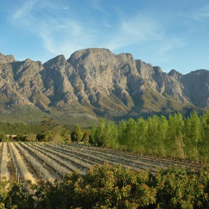 Franschhoek Vineyards - Cape Winelands