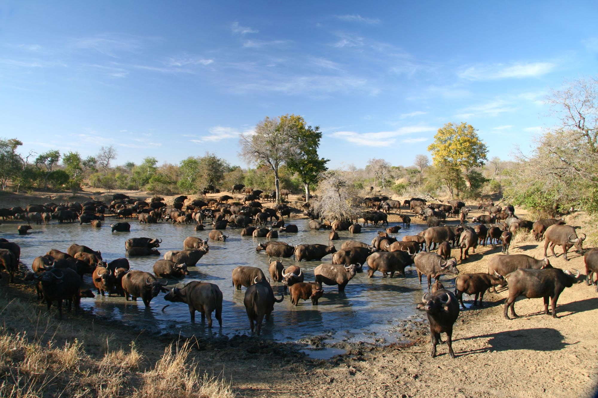 The Timbavati Private Nature Reserve