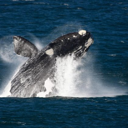 Whale Watching - South Africa