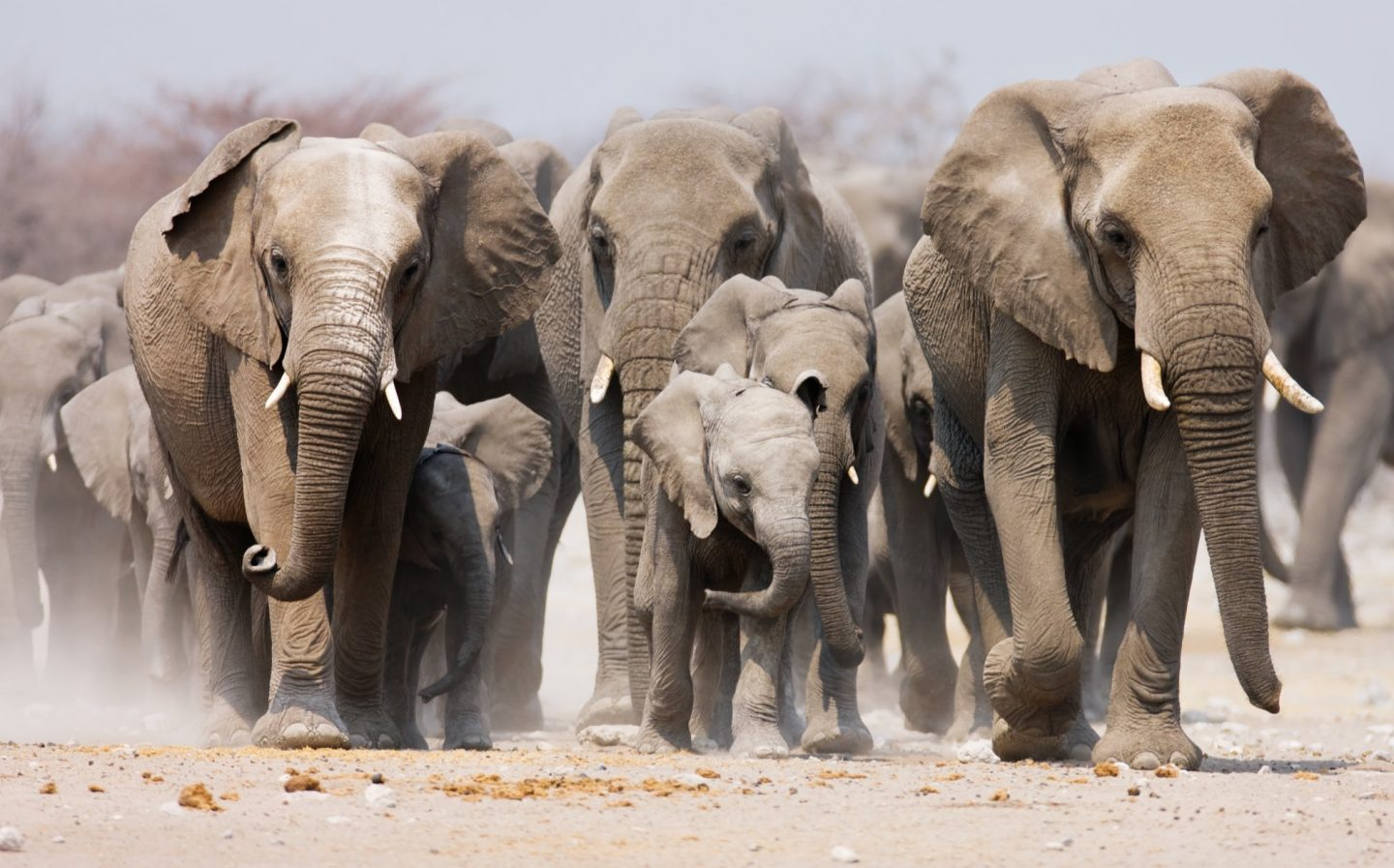 Elephants - Timeless Africa Safaris - About us