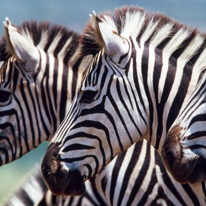 Zebra - Travelling with kids - Family trips