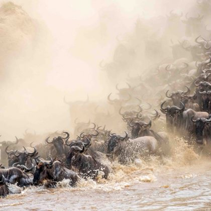 Africa - The Great Migration