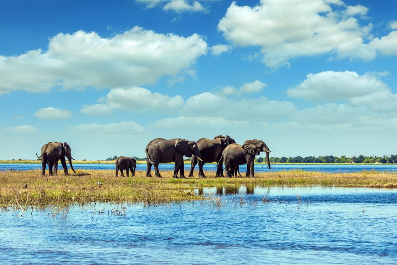 Elephants at the Chobe Riverfront, Botswana