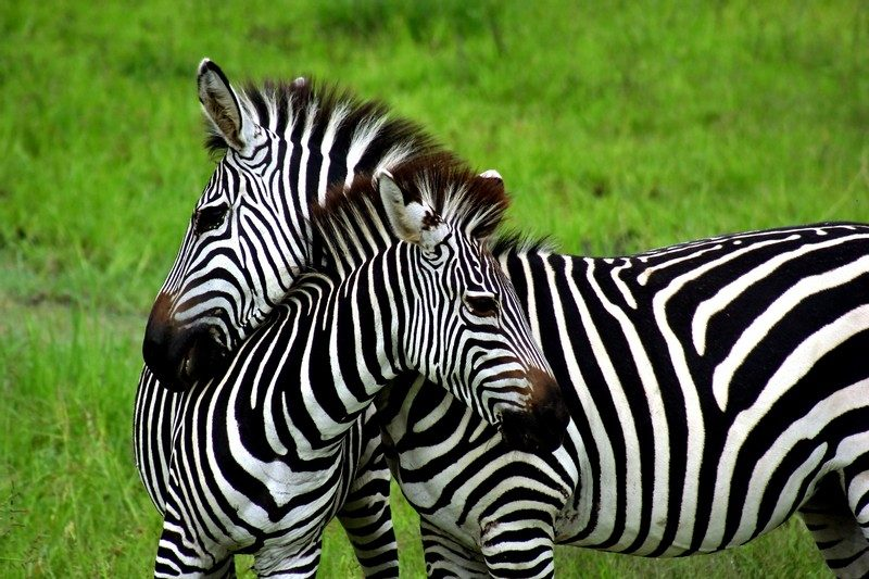 Visit South Africa with Timeless Africa Safaris
