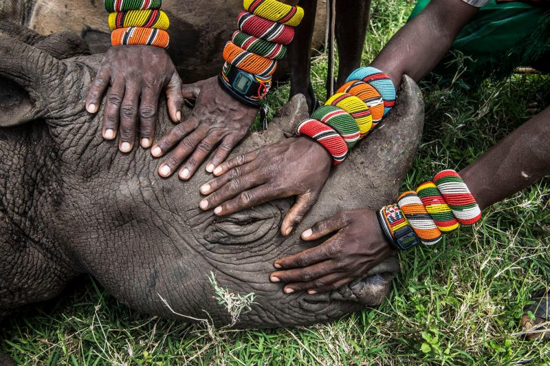 Samburu warriors from Sera in northern Kenya encounter rhinos for the first time