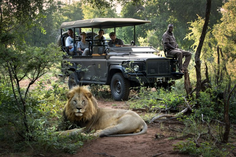 morukuru_family_madikwe_-_male_lion_sighting